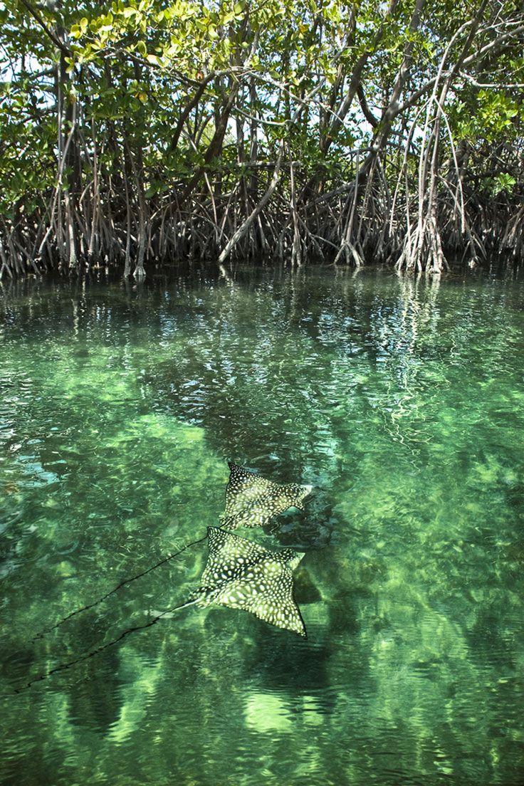 St. Thomas Mangrove Lagoon And Cas Cay Kayak, Hike, And