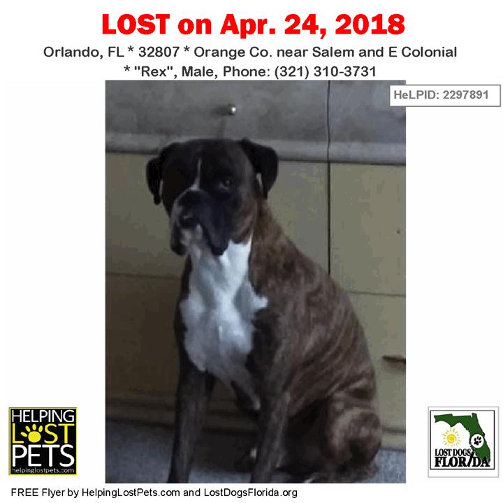 Have you seen this lost dog? LOSTDOG Rex Orlando (Salem