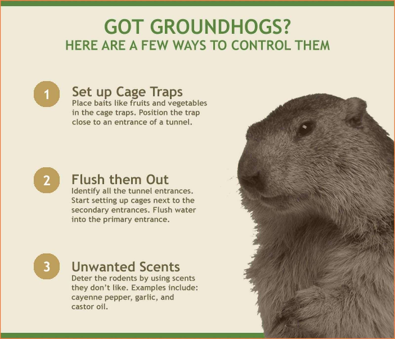How To Keep Woodchucks Out Of Garden Get rid of