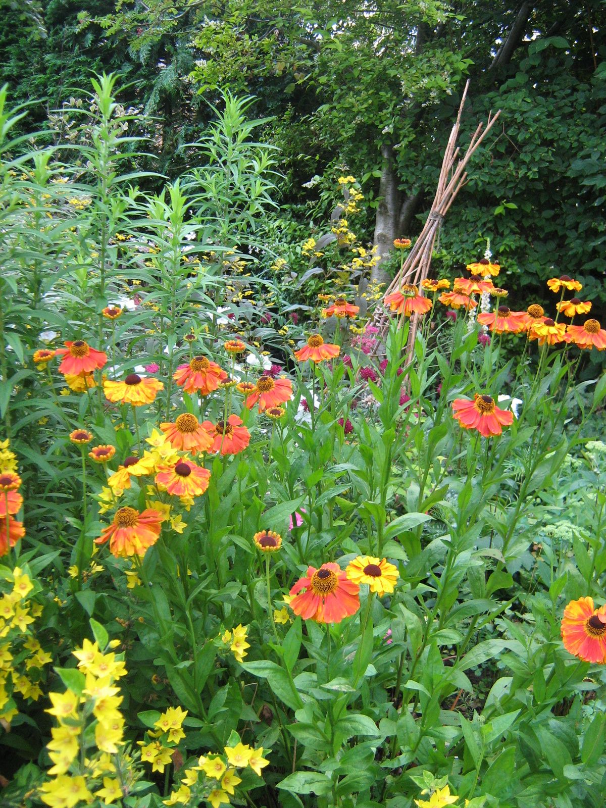 Big Border August, I plant as many companion plants as I can and it buzzes with bees, I have  bee boxes and insect hotels all over the veg patch.....