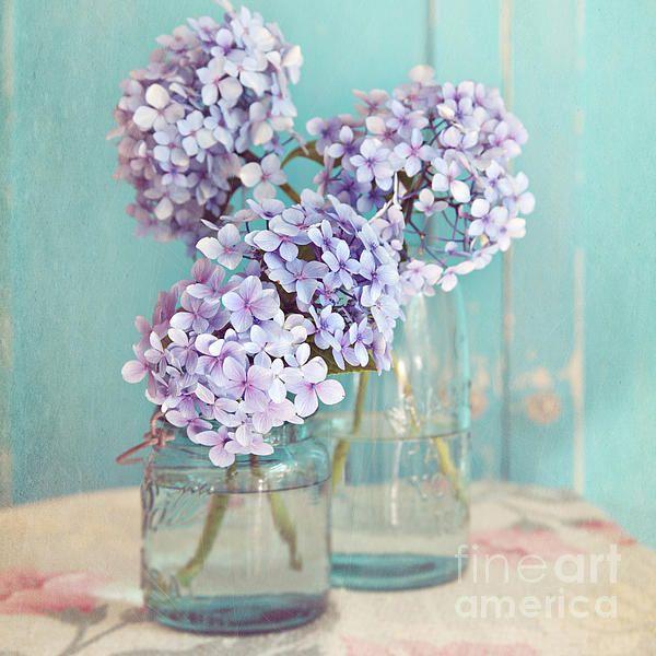 #hydrangea #stilllife #shabbychic #aqua #purple #blue #flowers