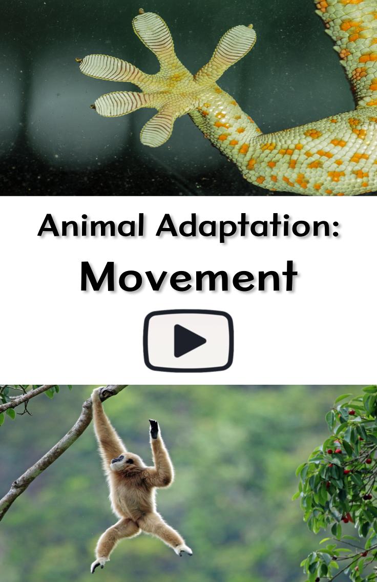 Animal Adaptation Movement Animal adaptations, Animal