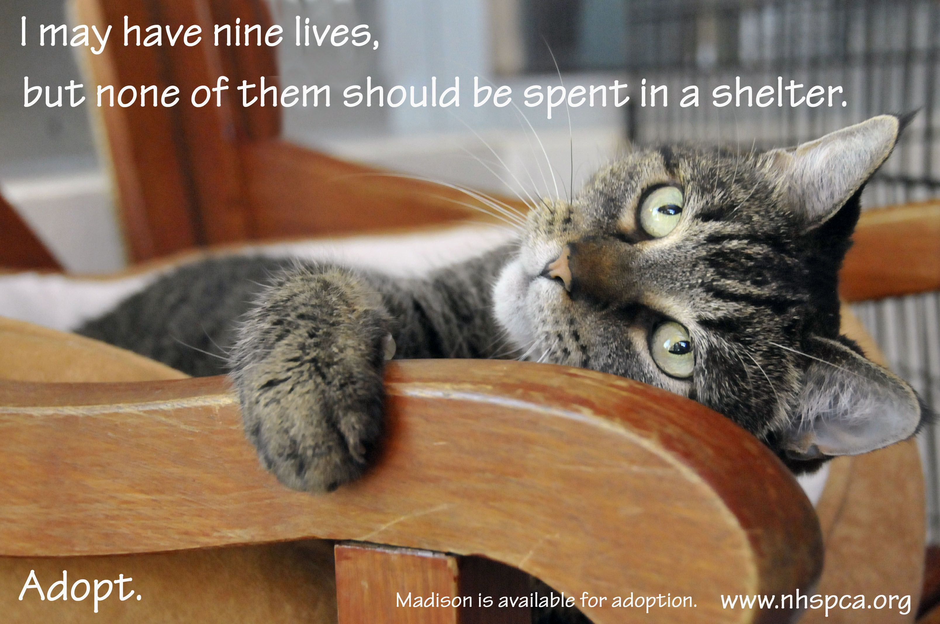 We have too many cats and not enough adopters. Please come