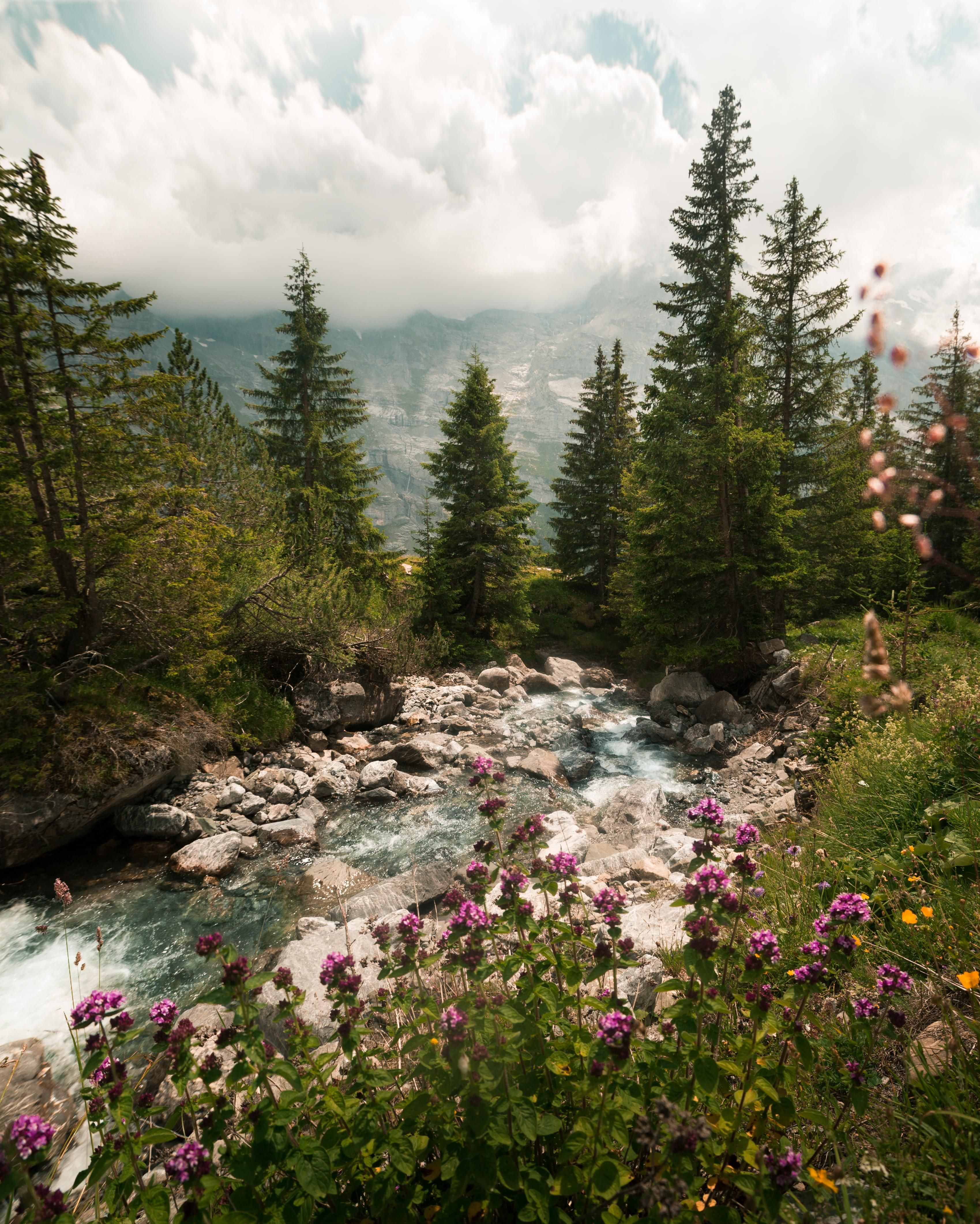 Amazing Scenery: #nature #beautiful #scenery Summer River In The Swiss Alps
