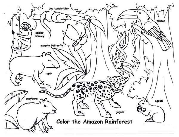 Amazon Rainforest Animals Coloring Page