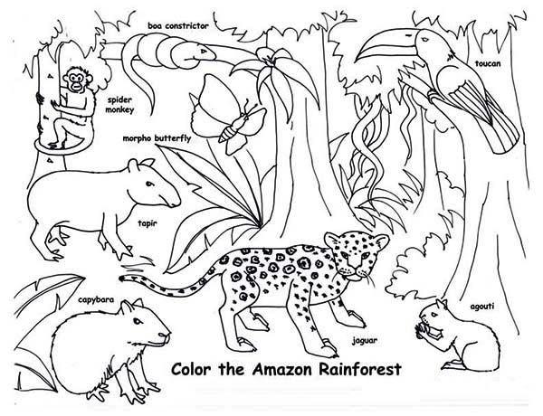 amazon rainforest animals coloring page  rainforest
