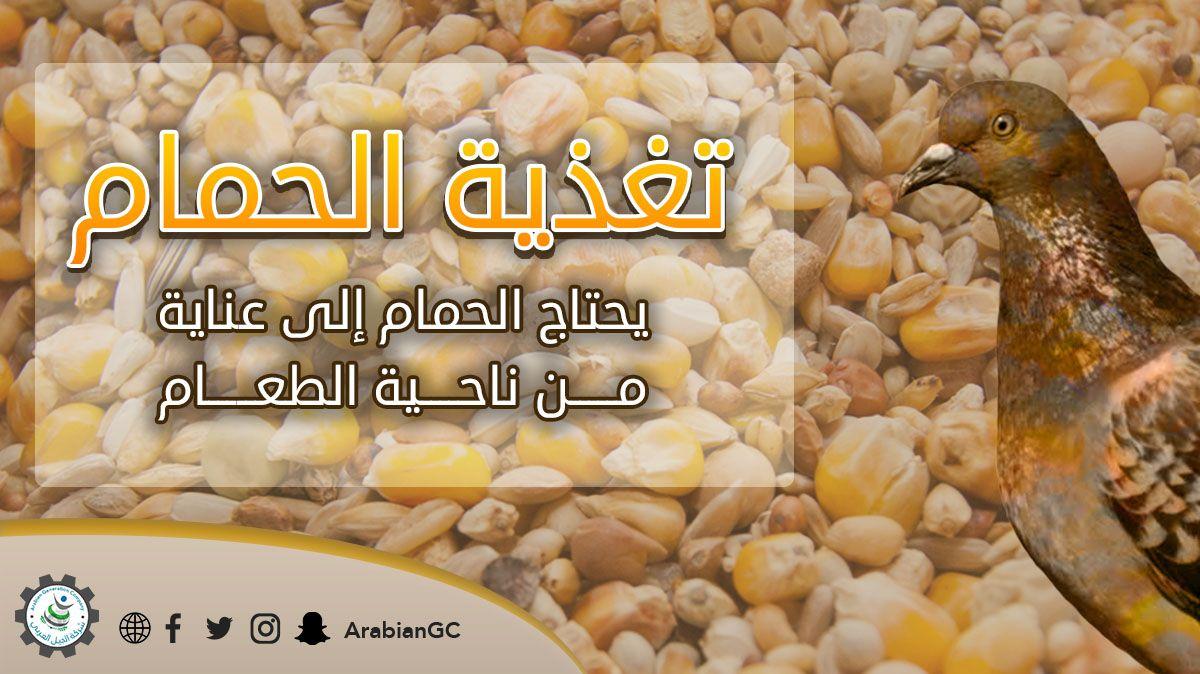 من أغذية الحمام المعروفة القمح والذرة البيضاء والدخن والعدس ويوجد في الأسواق مخلوط الحبوب وهو المفضل لتغذية الحمام بدلا من شراء كل Animal Feed Vegetables Corn