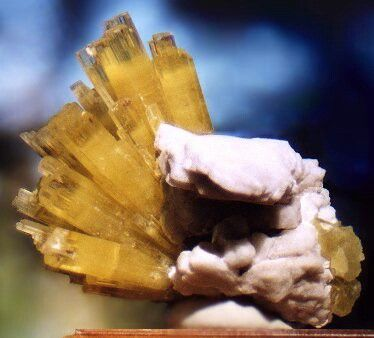 Beathtaking spray of yellow Heliodor crystals on Albite!! The center of each crystal is frosted yellow and this changes over to a very gemmy yellow near the top termination. This spray is made up of over a dozen beautiful crystals with a few Smoky Quartz crystals mixed in for accenting. The blocky Albite crystals are quite attractive as well and make for excellent contrast. From the Zelatoya Vada Mine near Rangkul, Tajikistan. Measures 7 cm by 7 cm in size.