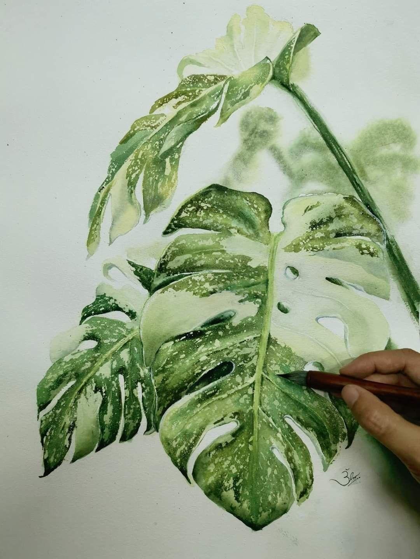 monstera variegated watercolor plants monstera watercolorart ...