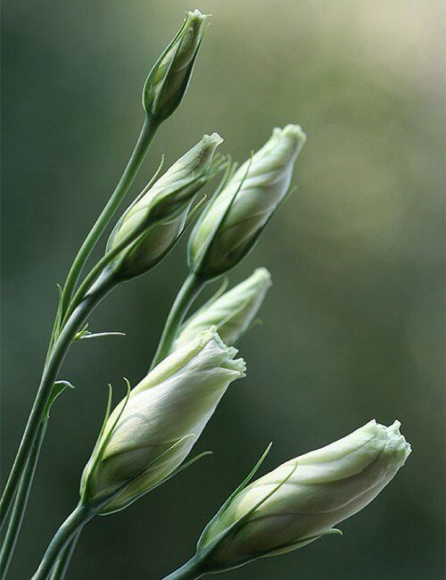 Inspiration | Цветы, Необычные цветы и Красивые цветы