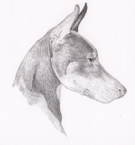 Doberman Pinscher Signed Personalized Original By Hansford800