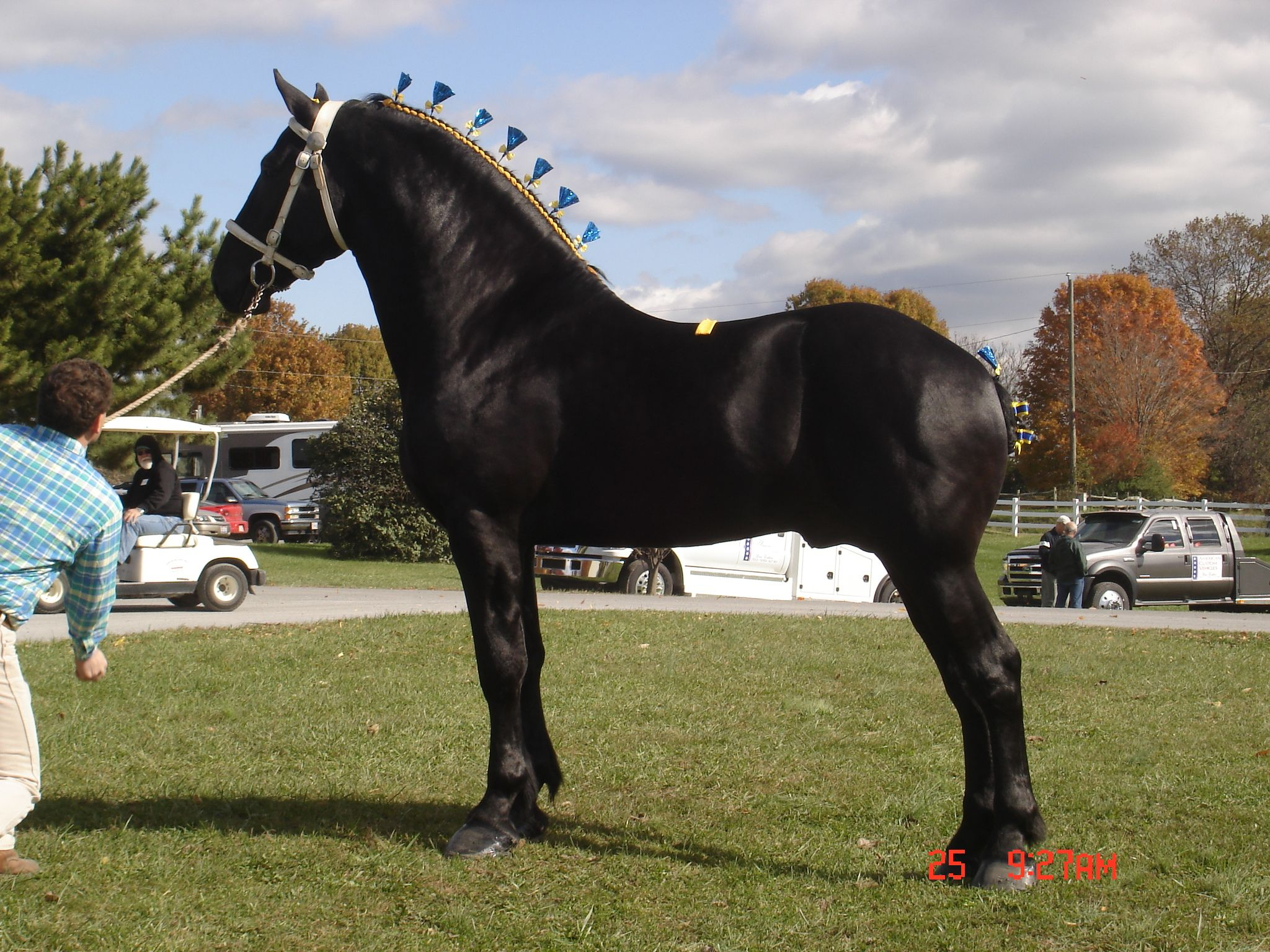 Friesian Screensaver Wallpaper  Horse Experts Horse