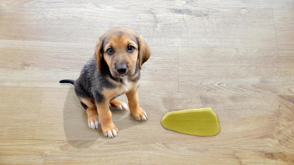 Tiere in der Wohnung Wer muss für bepinkelten Boden