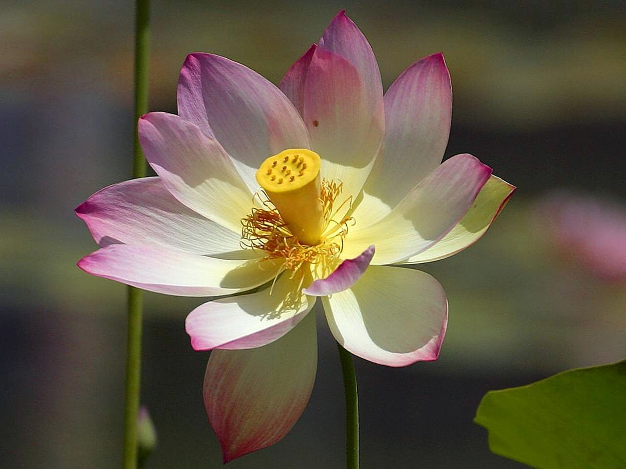 The Simple Perfection Of A Flower Natures Mandala Ashmends
