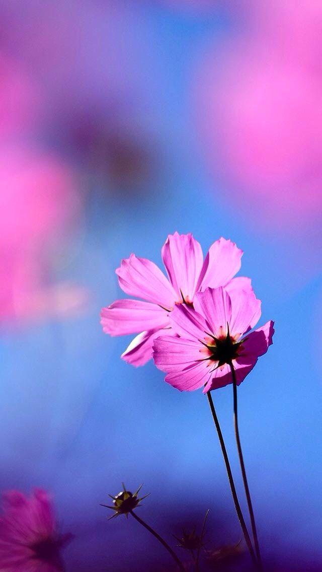 Flores Moradas Cielo Fondos Pantalla En 2019 Fondo Pantalla