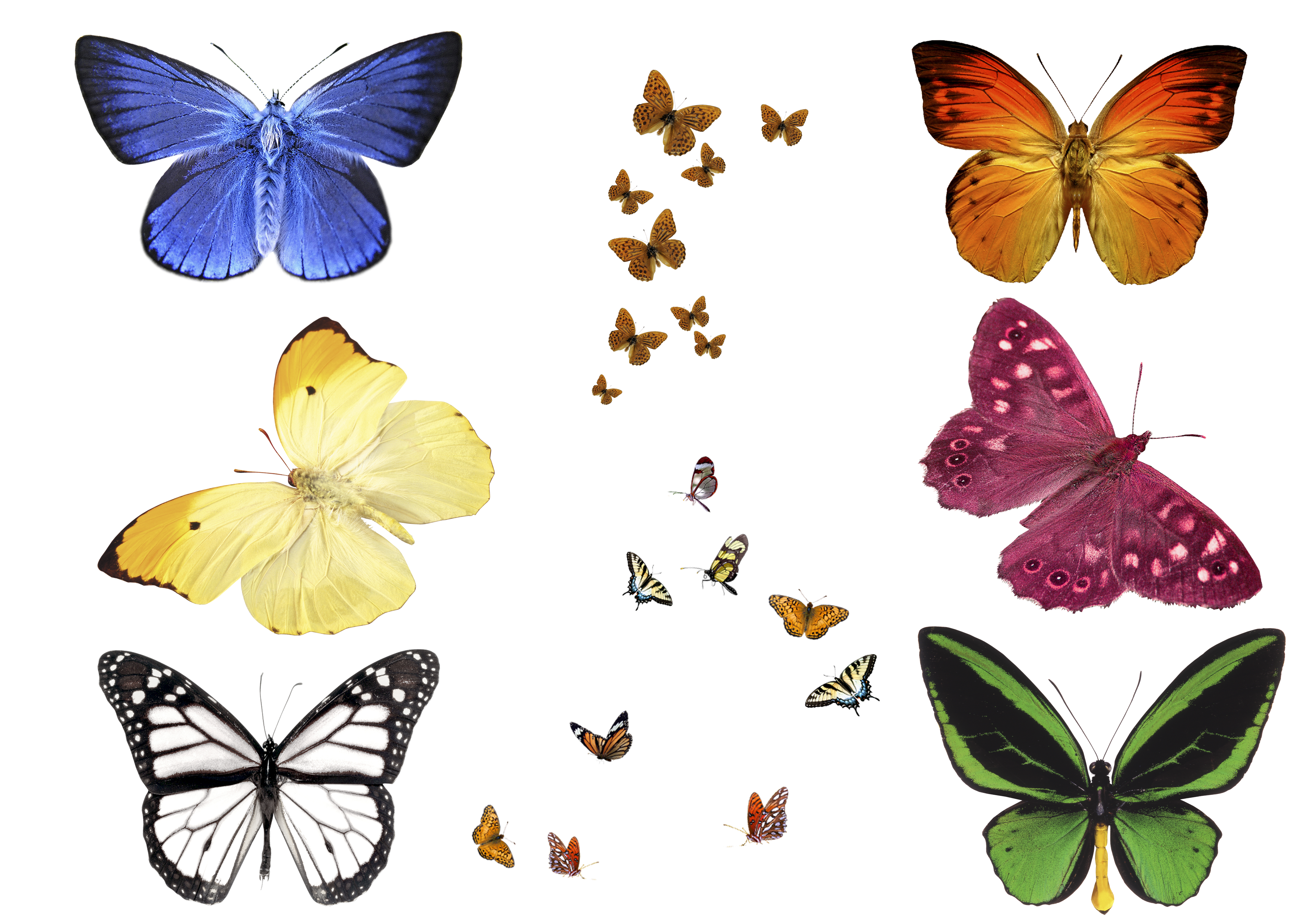 трафарет бабочки для корел