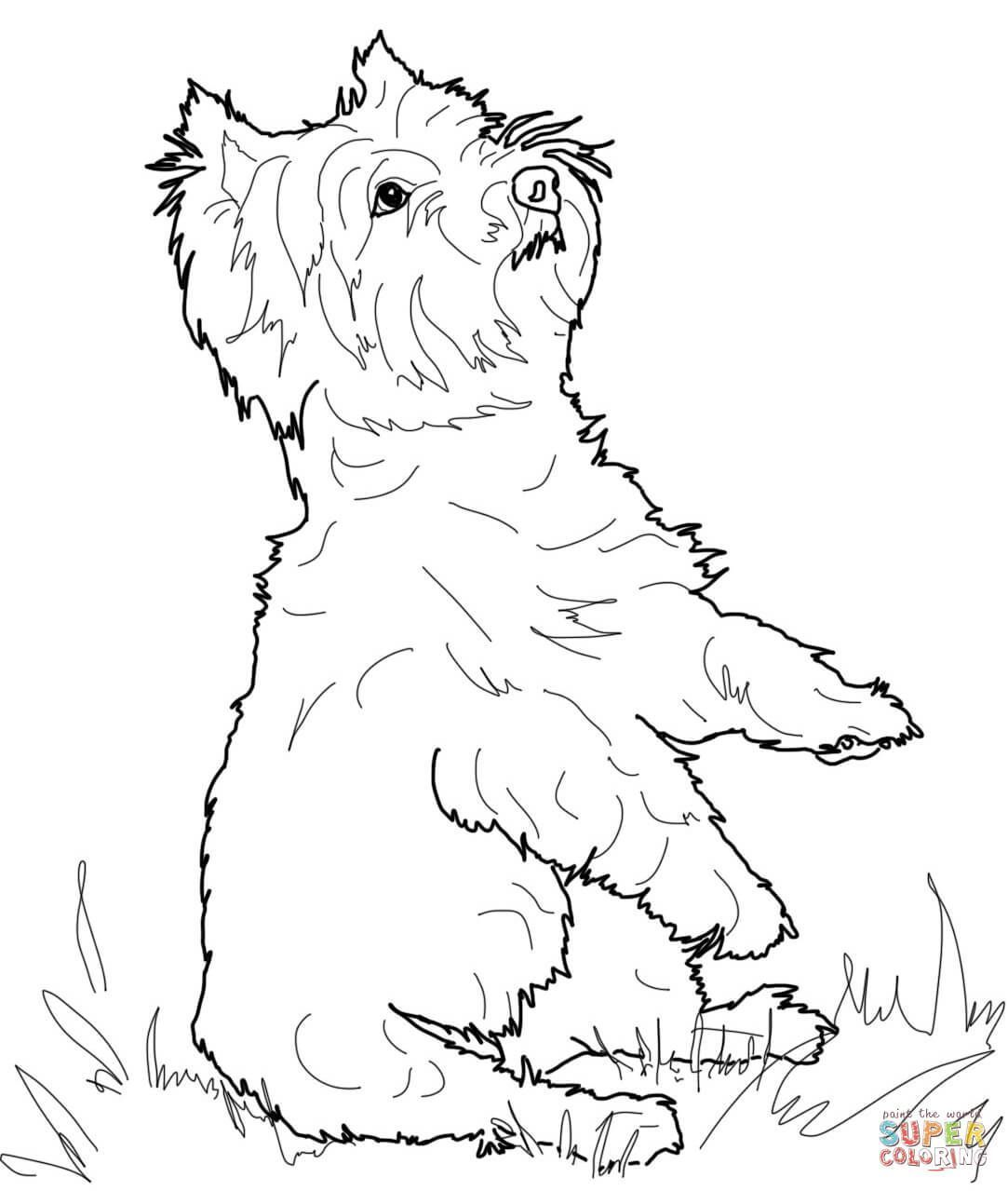 Yorkshire Terrier Or Yorkie Coloring Page Free Printable Yorkiecolors Yorkieadult Dog Coloring Page Dog Coloring Book Coloring Pages