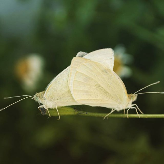 :) mariposas amorosas