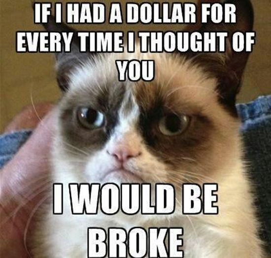 Photo of Top 25 Grumpy Cat Memes – CatTime