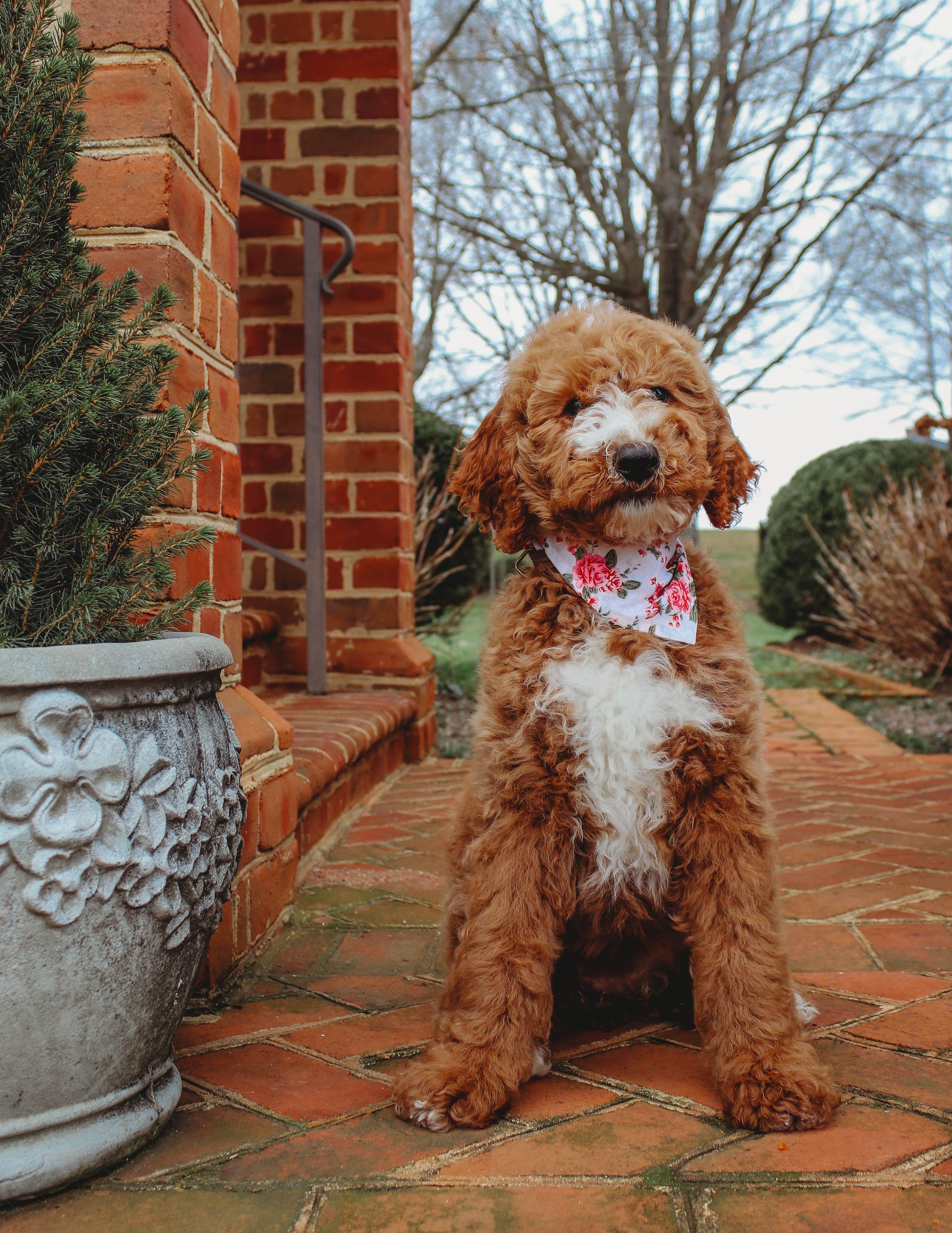 Hazel In 2020 Puppy Training Puppy Stages Puppies