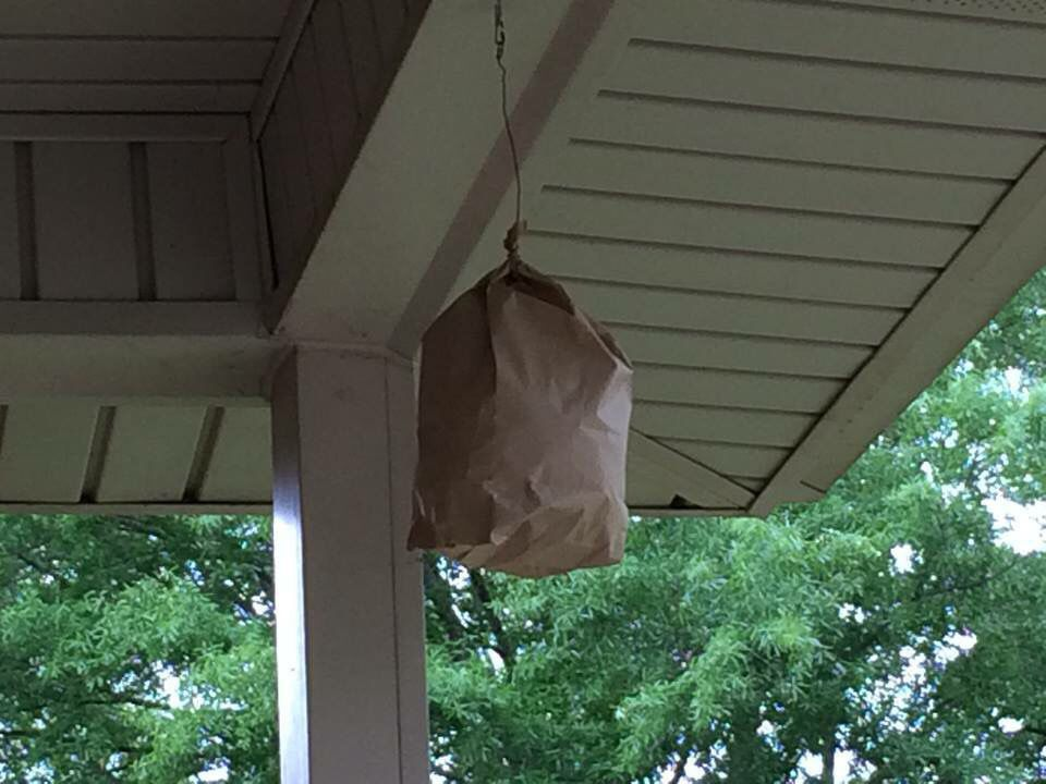 6bc167fc5532bd64196a9b109426bfcf - How To Get Rid Of Small Paper Wasp Nest