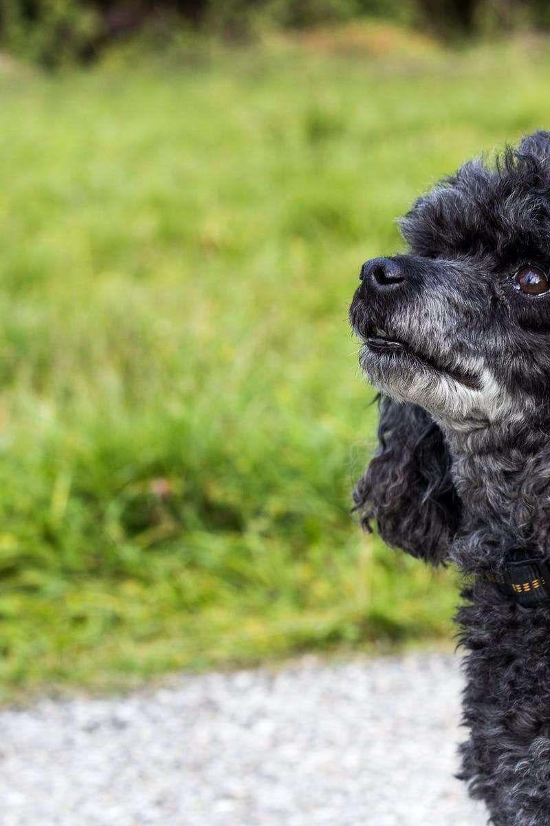 Pet Dog Training Tips Many Individuals Imagine That Dog Training
