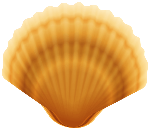 Clam Shell Transparent Png Image Free Clip Art Clip Art Clam Shell