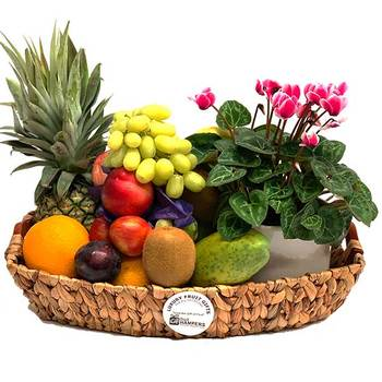 Fruit Basket Plant Gift Cyclamen Hampers Fruit basket