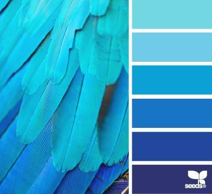 Feathered Blues Paleta De Azul Gama De Colores Azules Paleta De Colores Azul