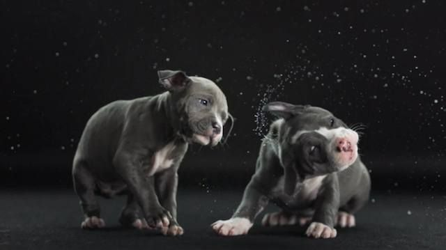 Playful puppies. Watch What Happens When Dogs Shake Themselves Dry • BoredBug