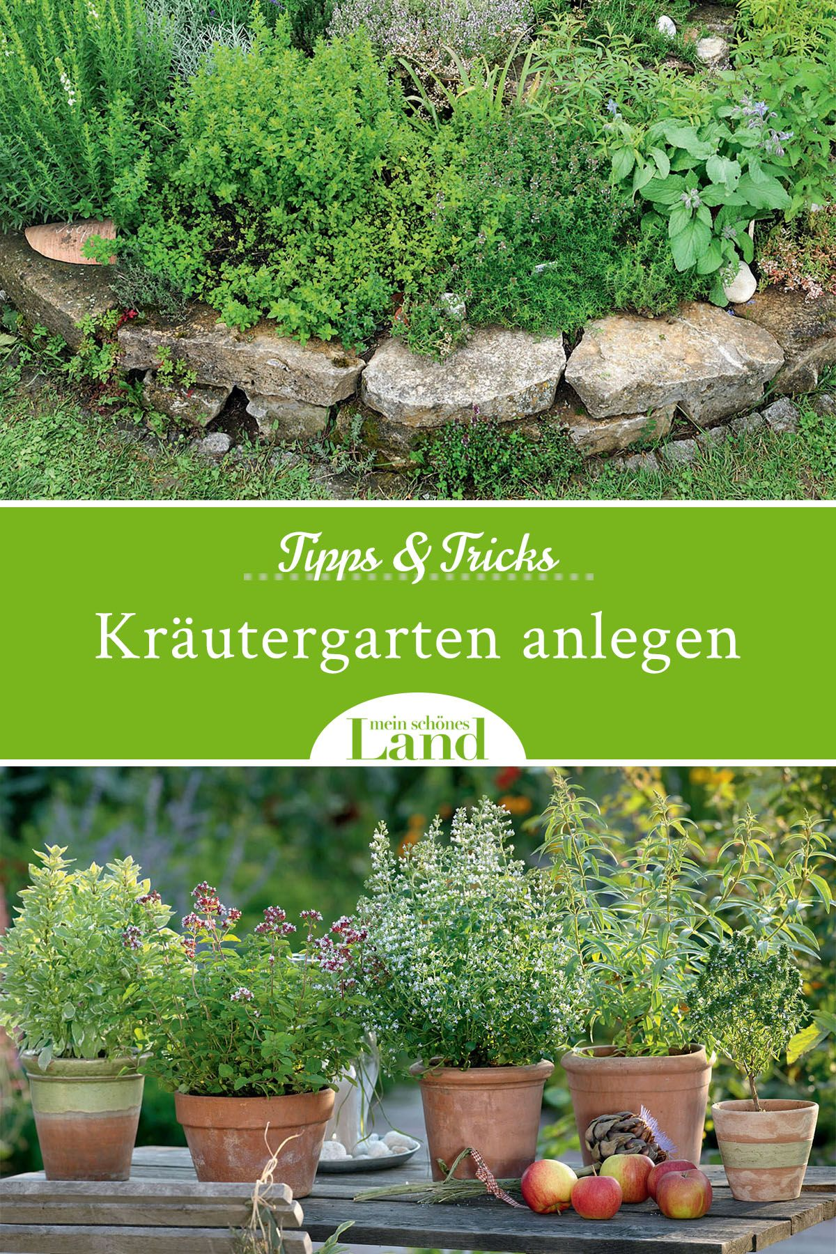 Photo of Tips and tricks for your herb garden