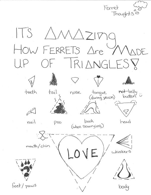 What makes a ferret? Triangles apparently. | ferrets | Pinterest ...