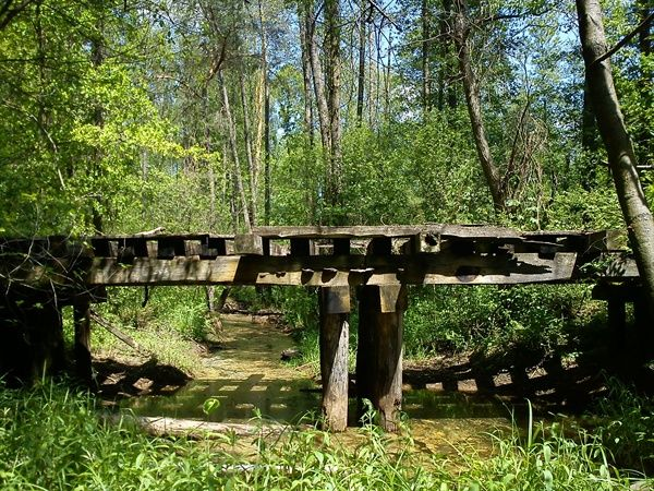 Pozostałosci po mostku leśnej kolejki waskotorowej