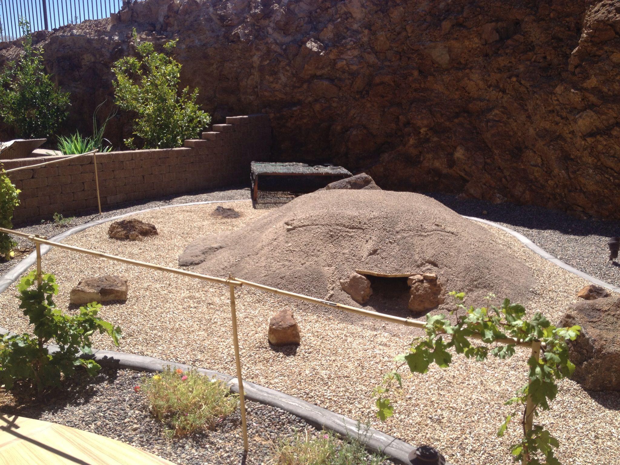 Tortoise habitat ! Tortoise house, Tortoise habitat