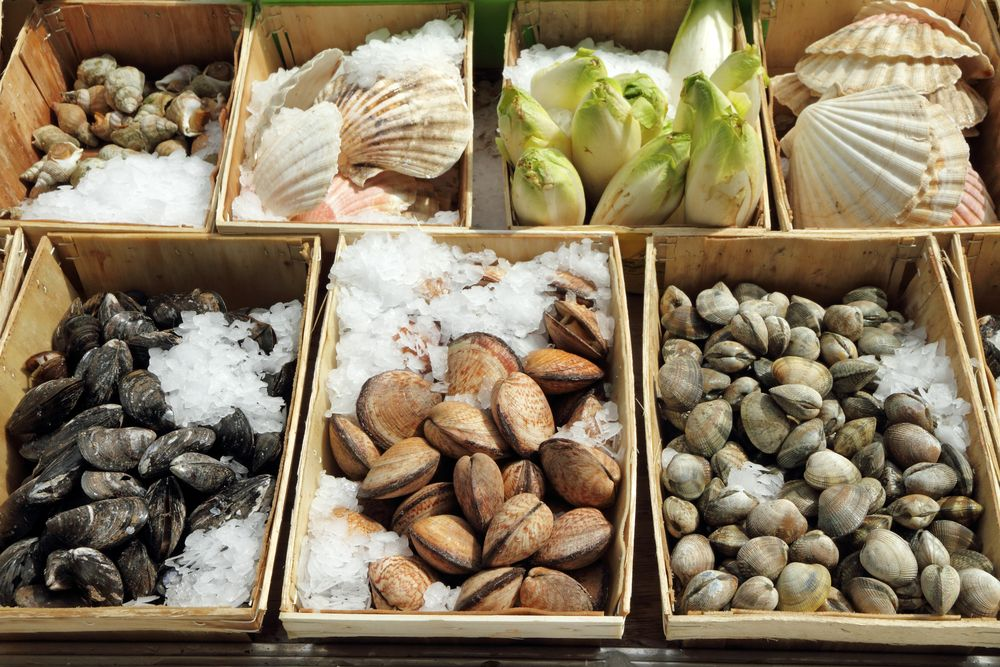 Display of shellfish, Brussels, Belgium