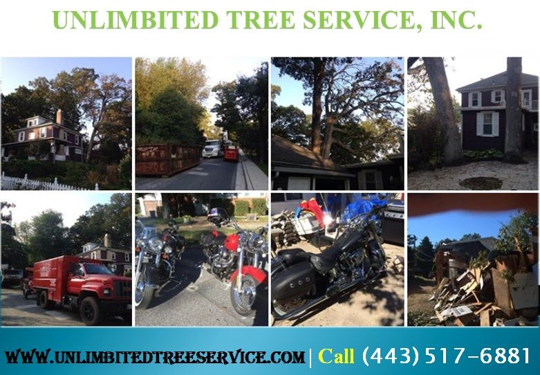 Expert tree trimming columbia by unlimbitedtreeservic