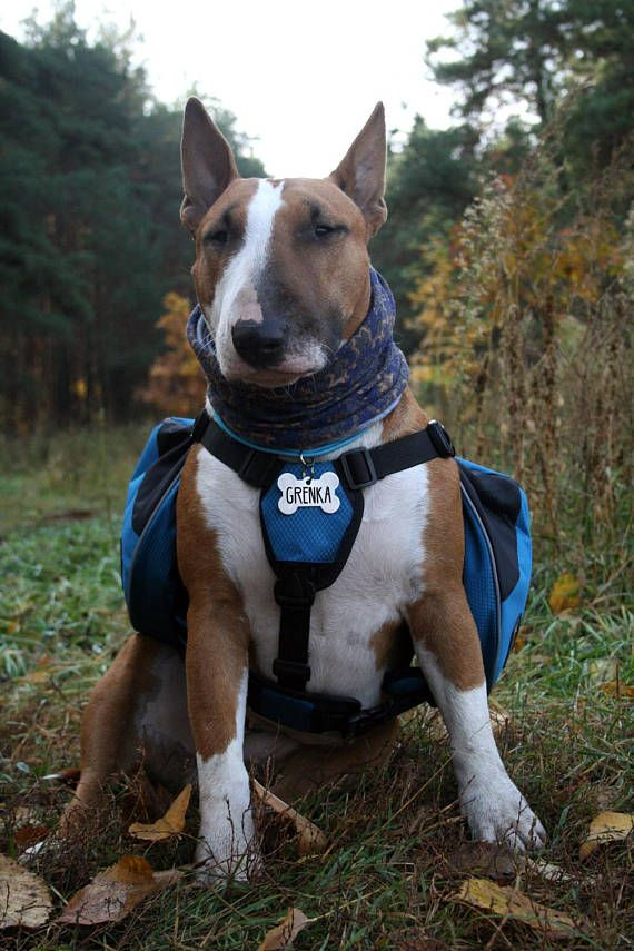 Harness Dog Saddlebags Pack Hound Travel Camping Hiking With