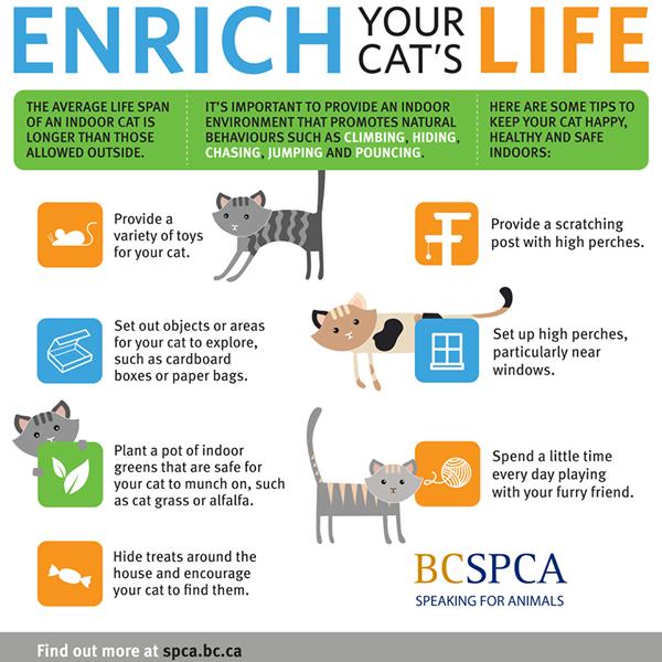 Bc Spca Indoor Cat Cat Illnesses Cats