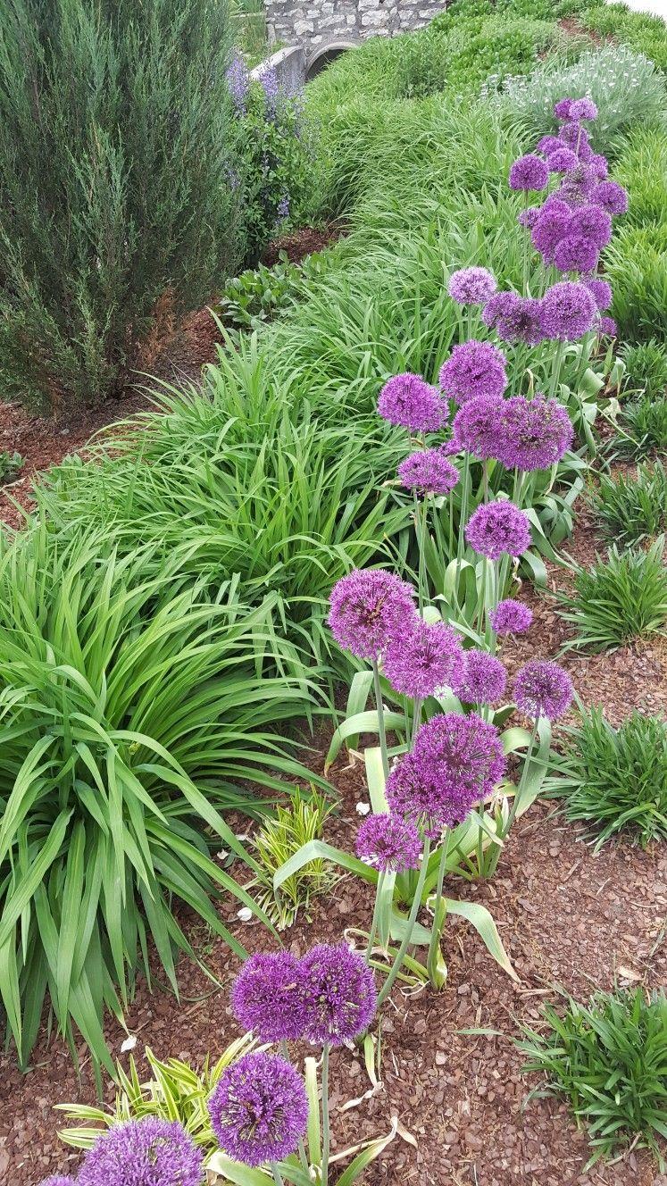 Pin By Orna Nenner On Garden Magic Plants Garden 400+ garden and backyard landscape design ideas