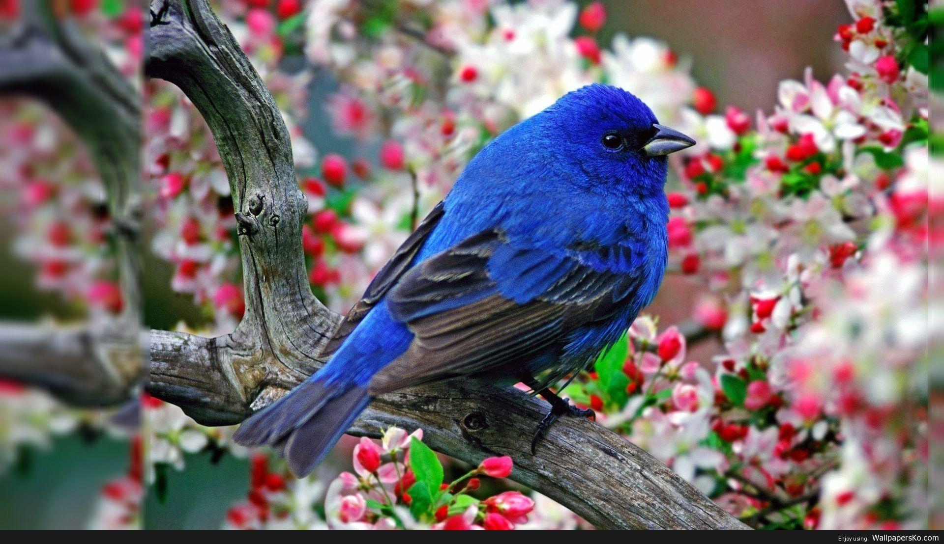Desktop Background Birds Http Wallpapersko Com Desktop Background Birds Html Hd Wa Beautiful Bird Wallpaper Birds Wallpaper Hd Animal Photography Wildlife