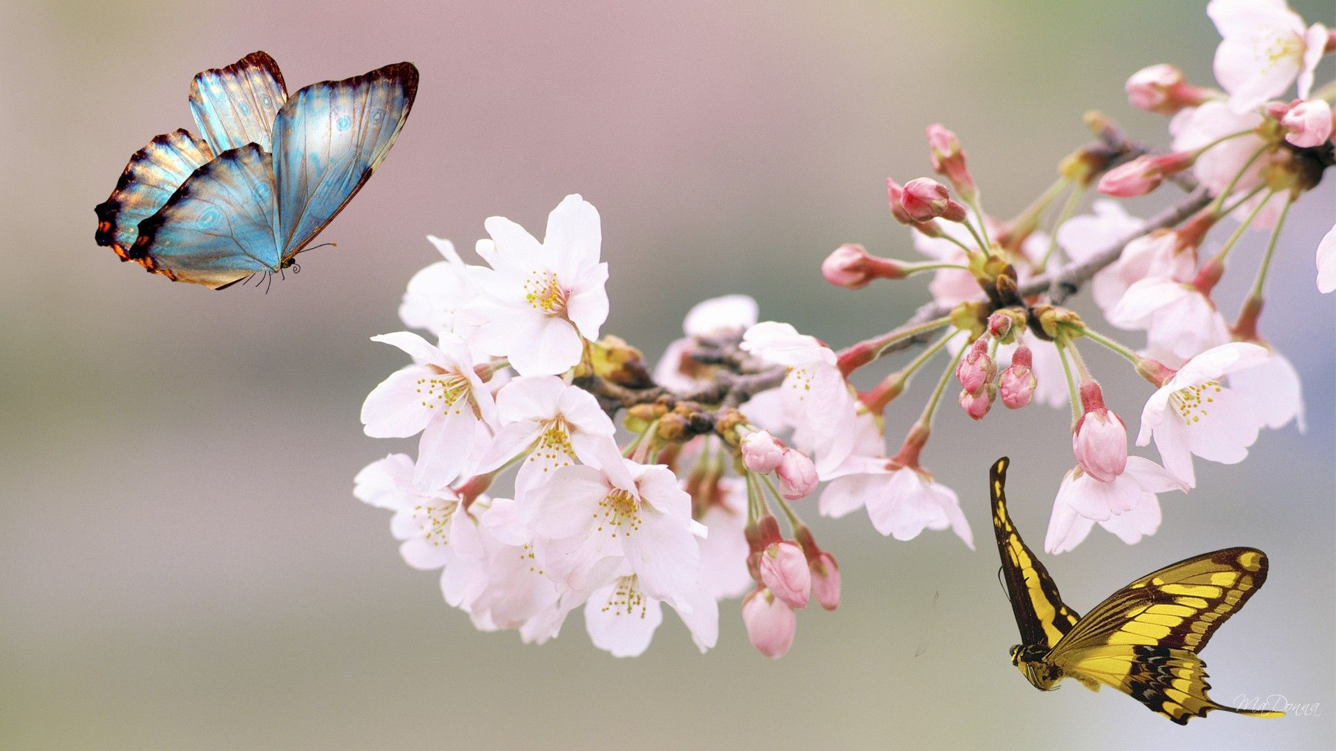 53 Flowers and Butterflies Wallpapers Flower