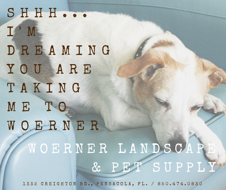 Woerner Landscape Is Now Woerner Landscape Pet Supply Pensacola Landscape Pets
