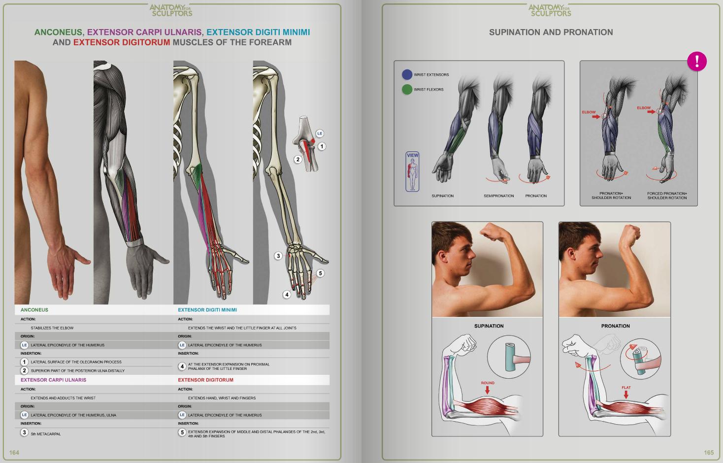 Pin von Andy Latham auf Human Anatomy   Pinterest