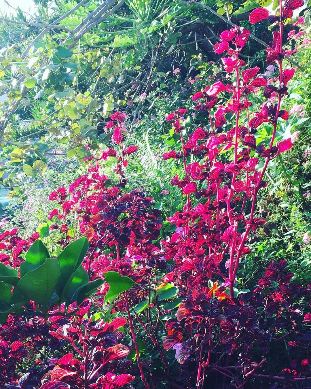 Garden Pond Plants Near Me 400 x 300