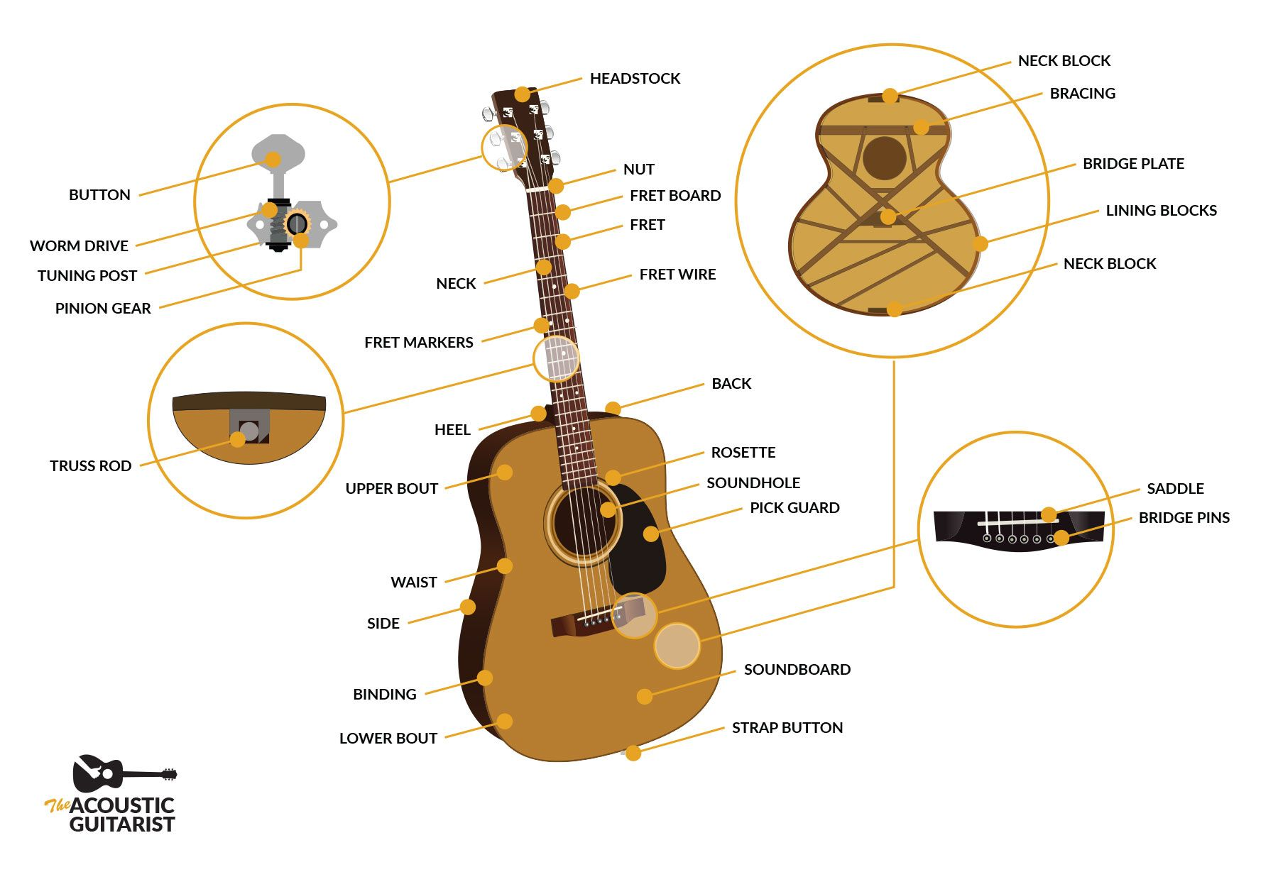 Anatomy Of An Acoustic Guitar Acoustic Guitar Acoustic Guitar