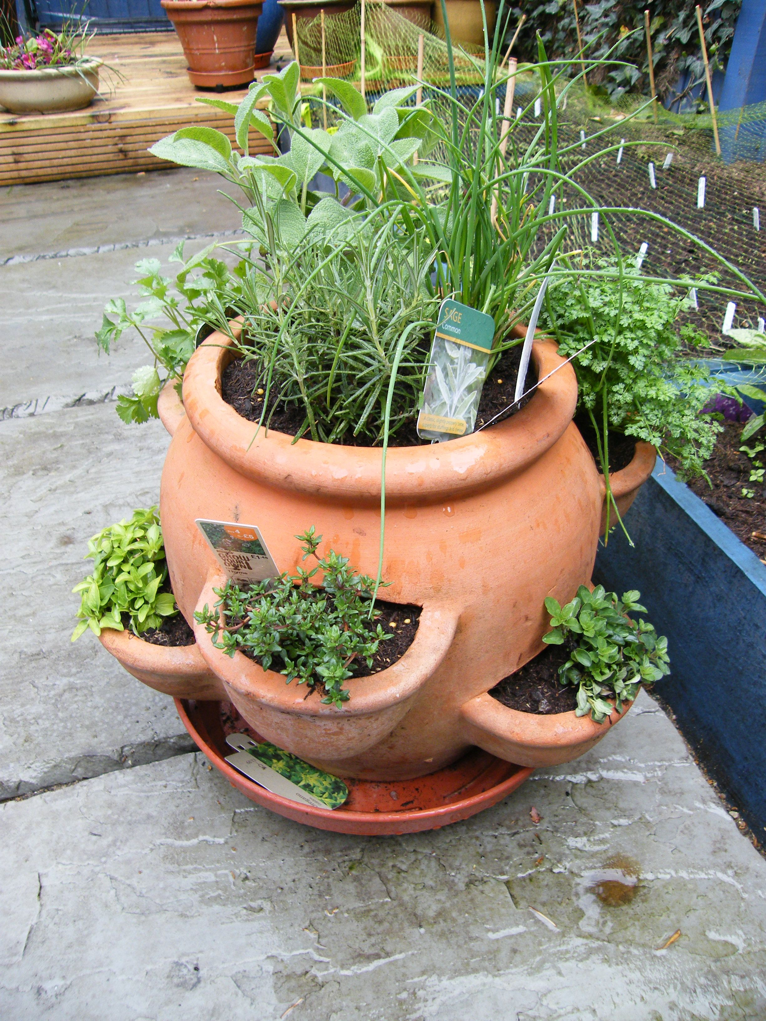 How To Plant Herb Pots Thyme And Oregano Are Low Growing Plants So Place Them In A Lower Hole Chives Dill Grow Slightly Taller These Should Be