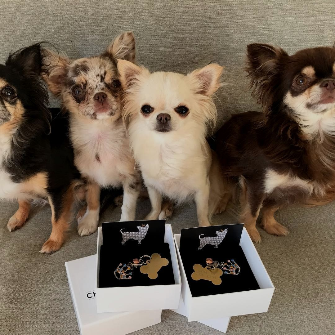 Chihuahua Planet On Instagram Chihuahua Dogs Training Your Dog