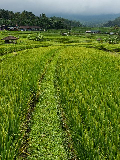 I Nearly Lost My Shoe In This Rice Terrace Beautiful Places Nature Village Photography Meditation Garden