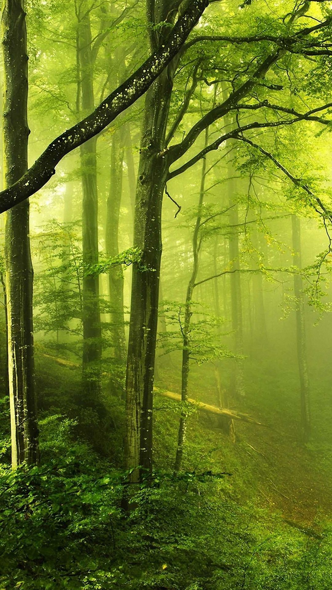 Forest Wallpaper Android In 2020 Forest Wallpaper Forest Photos Beautiful Forest