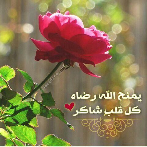 صبااح القلب الشكور نسال اللـﮧ مع كل زخة مطر ان يسعد ارواحكم برحمته Cool Words Morning Wish Islam Muslim
